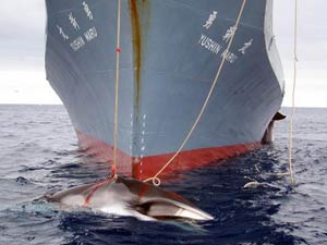 whaling_2