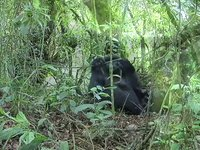Rwanda Ecotourism: Balancing Tourism and Sustainability